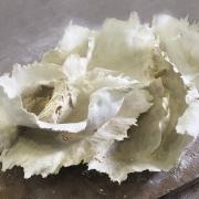 Sculpture-vegetale-2S